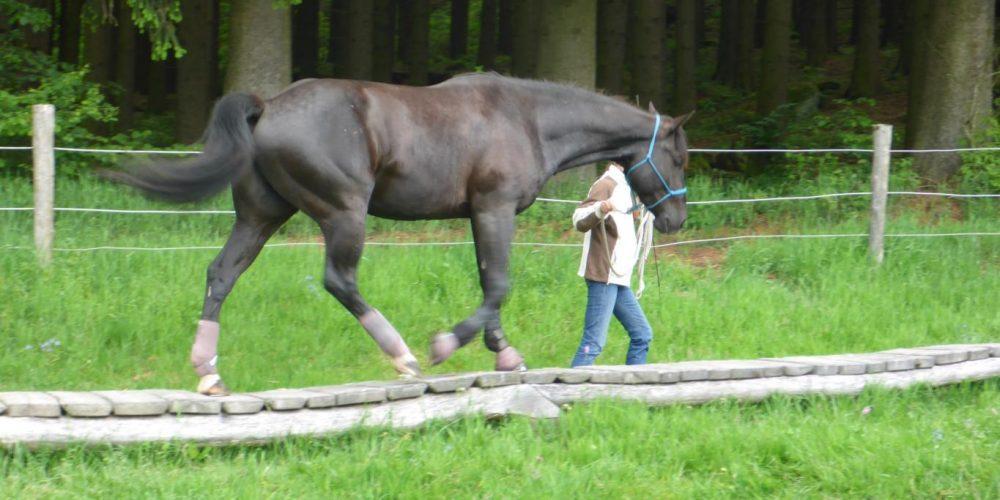 Pferdearbeit (M)it (H)erz - Manuela Huber